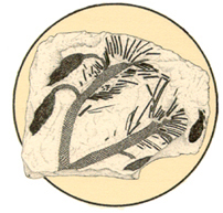 fossil_plants_circle