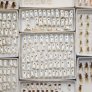 Linked to the Google folder with images of the facility and different kinds of specimens