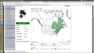 screen capture of USDA PLANTS database result for Acer pensylvanicum