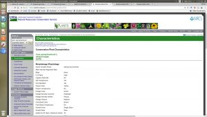 screen capture of USDA PLANTS database result for Acer pensylvanicum showing species characteristics.