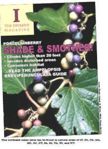 """Imaginary magazine cover of """"The Invasive Magazine"""" with cover image of porcelainberry"""
