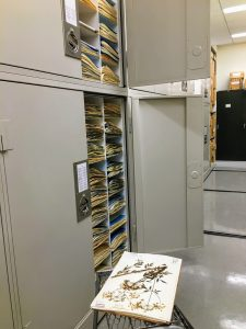 Open herbarium cabinet full of specimens