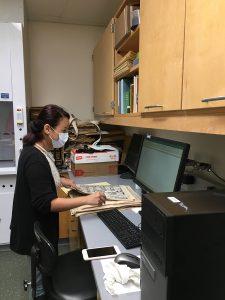 Vandana Gurung processing herbarium specimens